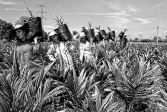 Abierta convocatoria para participar en Concurso Nacional de Fotografía Ambiental y Social en zonas palmeras 2021
